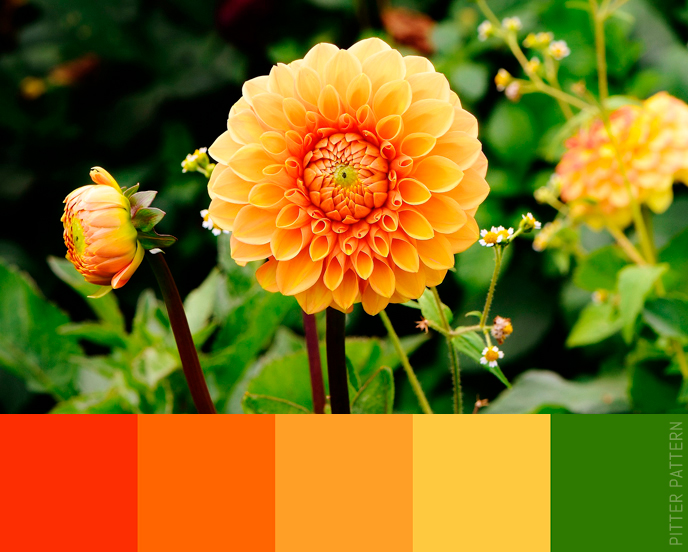 24 striking colour palettes for the daring [4] | Pitter Pattern