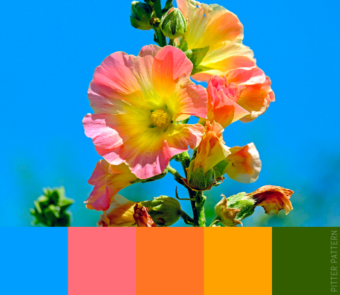 24 striking colour palettes for the daring [11] | Pitter Pattern