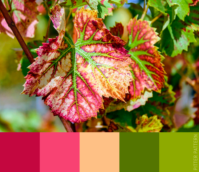 24 striking colour palettes for the daring [12]   Pitter Pattern