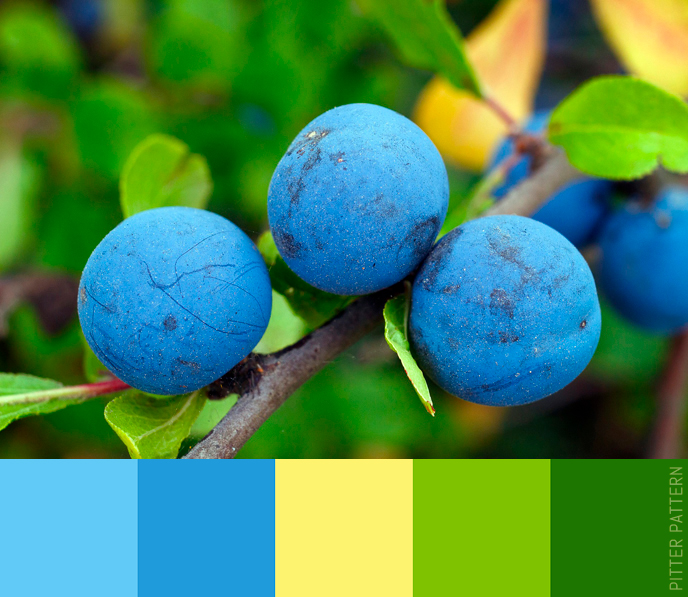 24 striking colour palettes for the daring [18]   Pitter Pattern